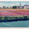 An0090 <br /> Bollenvelden, gezien vanaf de Floris Schouten Vrouwenpolder. Rechts de R.K. kerk, zoals die er tussen 1913-1928 uitzag. Links van de kerk staat het huis met het rode dak, 'Casa Reale'. Daarnaast de Gereformeerde kerk, die in 1912 is gebouwd. Foto: ca 1920
