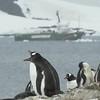 Imágenes de colonias de pingüinos en Hope Bay