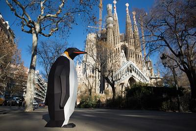 Photo opportunity - La Marcha de los Pingüinos