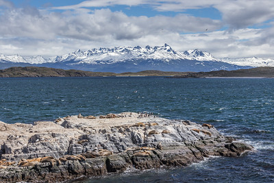 Sea Lions (Otaria flavescens) and Blue-eyed Shags (Phalacrorax atriceps) on Las Islas de los Lobos, Beagle Channel, Tierra del Fuego,  Argentina.  In the background: Dientes de Navarino, part of the Andes mountain range on Isla Navarino, Magallanes Region, Chile.