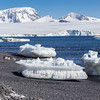 Icebergs and Gentoo Penguins (Pygoscelis papua) near Brown Bluff on the Tabarin Peninsula, Weddell Sea, southeastern side of the Antarctic Peninsula.