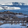 Adélie penguins near Brown Bluff on the Tabarin Peninsula, Weddell Sea, southeastern side of the Antarctic Peninsula.