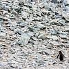 Persistence at Danco Island by Marc Poelman, Antarctica March 2016.