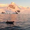 Last zodiac returning to Ortelius at the end of a glorious day in Cierva Cove on March 21, 2016. Photo by Carol Irwin.