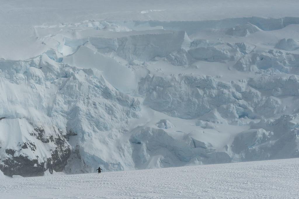 Mikkelsen Harbour, Antarctica