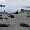 Fur Seals.  Interesting but never in a Good mood.