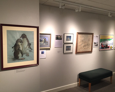 University Museum. The pastel study of penguins on the left is by Elizabeth Saltonstall, a  relative of Byrd's. She posed one penguin twice at Byrd's Boston house where the penguin lived in the bathtub. To the right are the items described earlier. January 26, 2018.