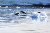 Adelie_Penguin_Flying0003