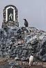 Penguins at shrine