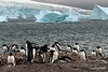 Gentoo-penguins-with-chicks,-Neko-Harbour,-Antarctic-Peninsula