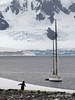 Gentoo-penguin-staring-in-disbelief-at-yacht,-Neko-Harbour,-Antarctic-Peninsula