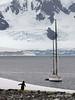 Gentoo-penguin-staring-in-disbelief-at-yacht,-Neko-Harbour,-Antarctic-Peninsula