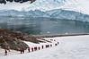 Walking-up-to-the-Gentoo-penguin-colony,-Neko-Harbour,-Antarctic-Peninsula