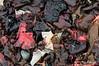 Kelp-as-abstract-art-2,-Couverville-Island,-Antarctic- Peninsula