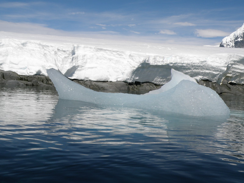 Fish shaped ice