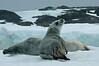 Seal (2)