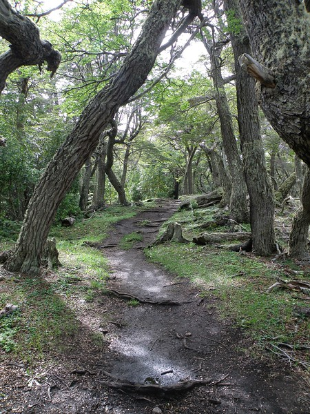 Our hiking path