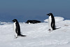 Adelie-penguins-on-ice-flow-4,-Wedell-Sea