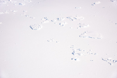 Sea ice and bergs in Marguerite Bay, Antarctica