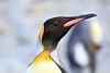 King_Penguins_0020