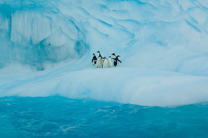 Adelie Penguins taking a break on an Iceberg