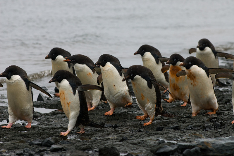 The March of the Penguins