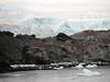 Cuverville Island - Gentoo penguins