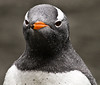I was in a Gentoo mood this morning.