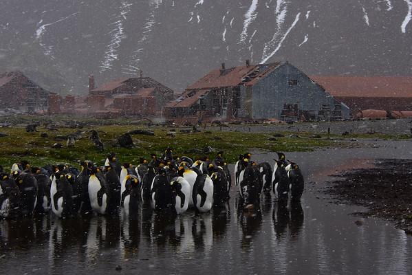 Antarctica, South Georgia and Falkland Islands