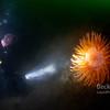Deception Island - diving in a volcano