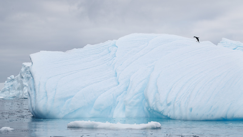 Dwarfed by the massive sculptured iceberg