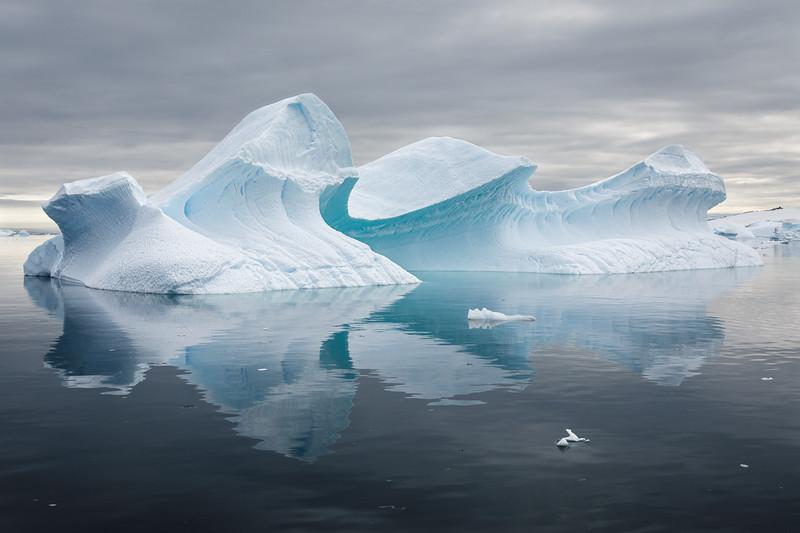 Fantastical sculptured icebergs