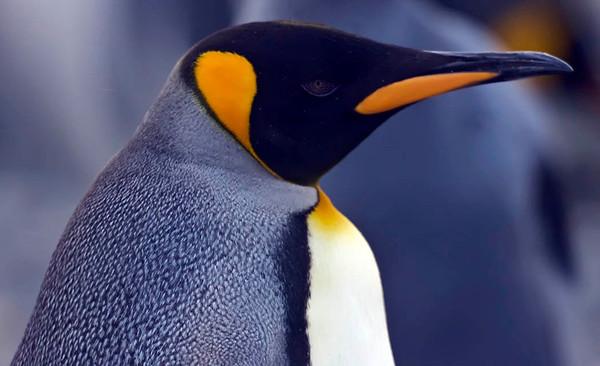 Antarctica - Feb 2008