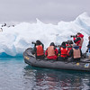 Photographing Adelie Penguins on a floating iceberg along the Antarctic Peninsula. By Doug Cheeseman in Antarctica, Jan 2009.