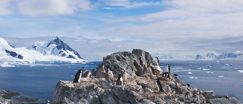 Beautiful February day in Antarctica.  While great for tourists, I'm sure it's too hot for the animals.