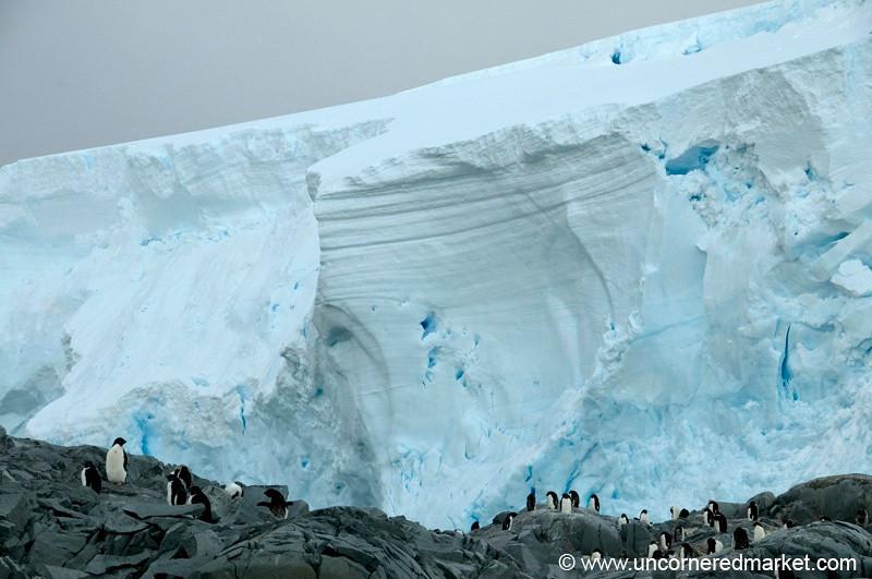 Penguins Near a Glacier - Antarctica