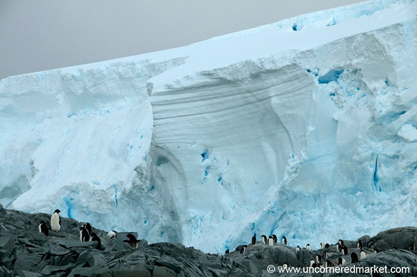 Penguins Near a Glacier - Antarctica
