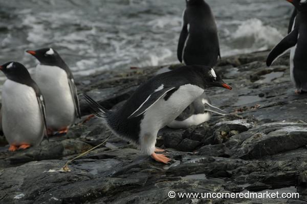 Penguin Poop - Antarctica