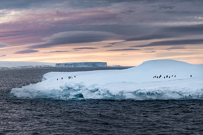 A more typical appearing sunset as the penguins ride a north bound iceberg