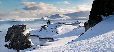 The penguins nest in large colonies.  This is half moon island and a major site for chinstrap penguins, but there are gentoo penguins here as well