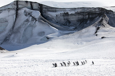 Other islands have less dramatic scenery, but even more penguins. This is a very large Chinstrap colony on Deception Island.