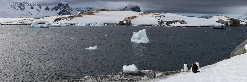 Useful Island is home to a large number of gentoo and some chinstrap penguins
