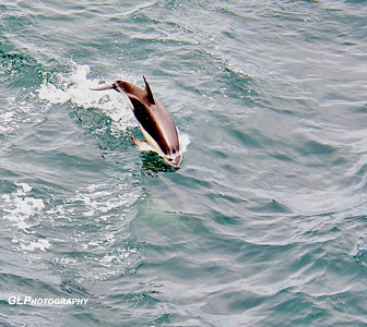 Antarctica - Dolphins, Cape, Birds