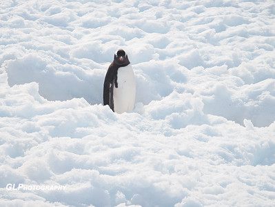 Antarctica - Errara Bay and Danco Island