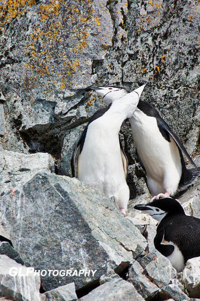Antarctica - Half Moon Island