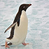 Antarctica - Ice Walk 033_2_DxO