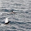 Killer Whales 12-14 - _007