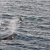 Killer Whales 12-14 - _008