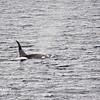Killer Whales 12-14 - _002