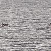Killer Whales 12-14 - _001